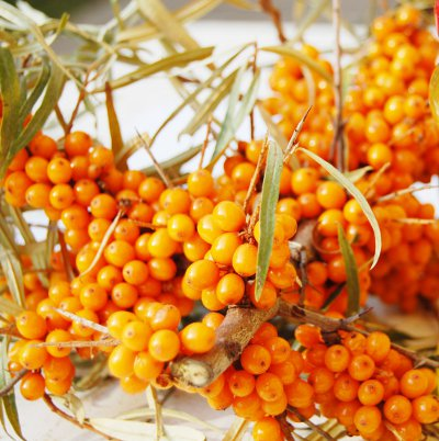 Culturi profitabile de plante medicinale: Cătina