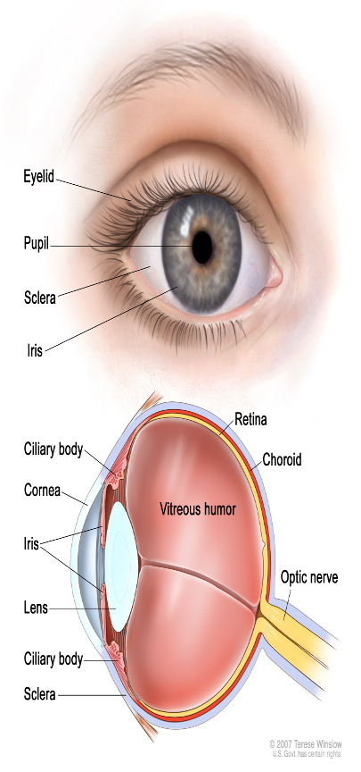 Lutein Plus Protejaza ochiul