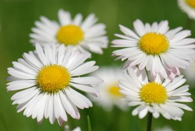 Plante benefice la menopauza